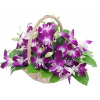 Mothers day Orchids
